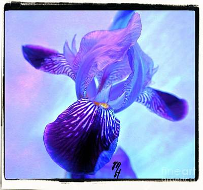 Beautiful Iris Original by Marsha Heiken