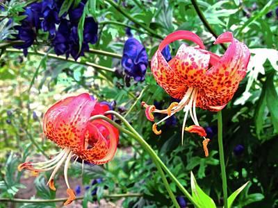 Photograph - Beautiful Irish Flowers by Stephanie Moore