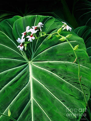 Photograph - Beautiful Ivory Veins Of A Philodendron by Sue Melvin