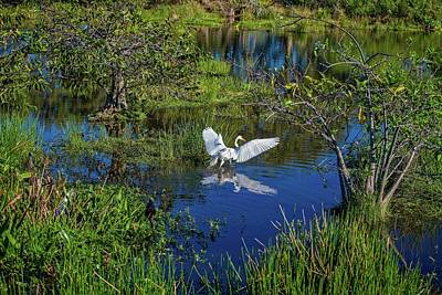 Photograph - Beautiful Landing by Lynn Bauer