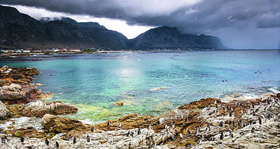 Photograph - Beautiful Landscape With Wild Penguins by Anna Om