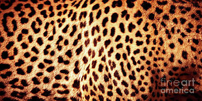 Photograph - Beautiful Leopard Skin Background by Anna Om