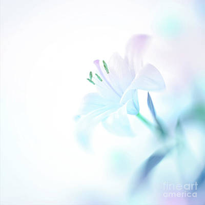 Photograph - Beautiful Lily Flower by Anna Om