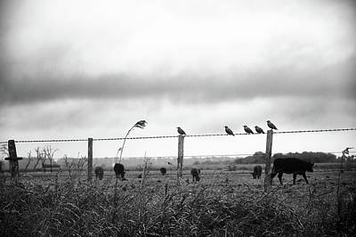 Photograph - Beautiful Little Birds On Fence by Eduardo Jose Accorinti