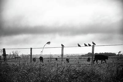 Photograph - Beautiful Little Birds On Fence by Fine Art Photography Prints By Eduardo Accorinti