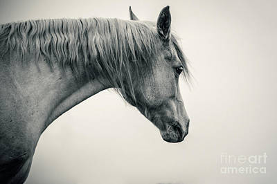 Photograph - Beautiful Lonely White Horse II by Dimitar Hristov