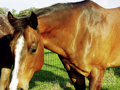 Photograph - Beautiful Mare by D Hackett
