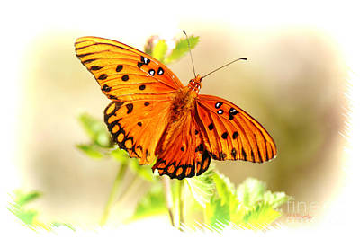 Photograph - Beautiful Gulf Fritillary by Donna Bentley