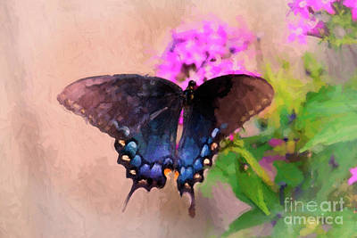 Pipevine Swallowtail Butterfly Photograph - Beautiful Morning by Betty LaRue