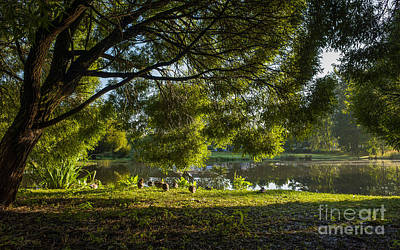 Photograph - Beautiful Morning By The Duck Pond by Ismo Raisanen