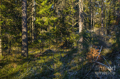 Photograph - Beautiful Morning In The Forest by Ismo Raisanen