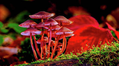 Photograph - Beautiful Mushrooms by Pixabay
