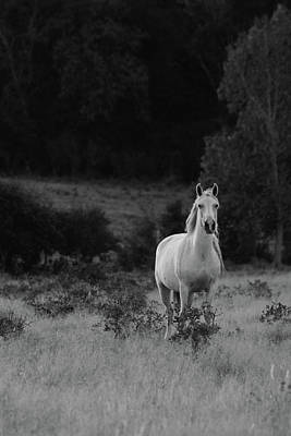 Photograph - Beautiful Mustang by Vonda Barnett
