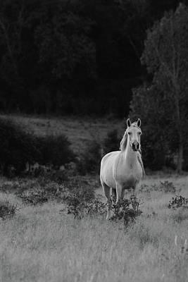 Photograph - Beautiful Mustang by Vonda Barnett