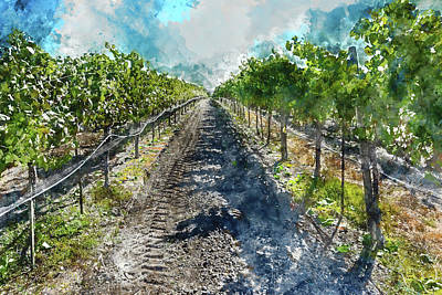 Photograph - Beautiful Napa Valley Vineyard by Brandon Bourdages