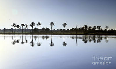 Beautiful Nature In Morning - Egypt. Art Print by Mohamed Elkhamisy