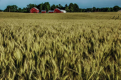 Photograph - Beautiful Ohio Wheat Field by Mike Eingle