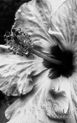 Photograph - Beautiful On The Inside by Rachel Hannah