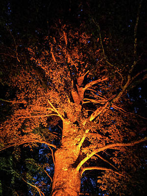 Photograph - Beautiful Orange Tree At Night by Michael Bessler