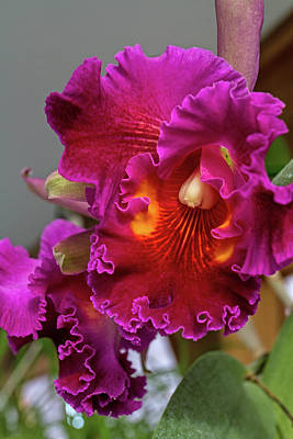 Photograph - Beautiful Orchid by Alana Thrower