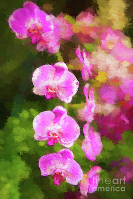Beautiful Orchids Art Print