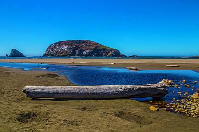 Driftwood Photograph - Beautiful Oregon Coastline by Garry Gay
