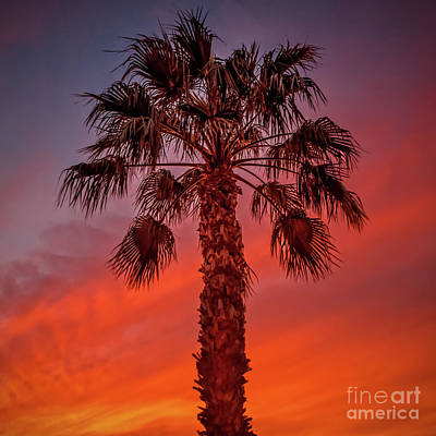 Photograph - Beautiful Palm Silhouette by Robert Bales