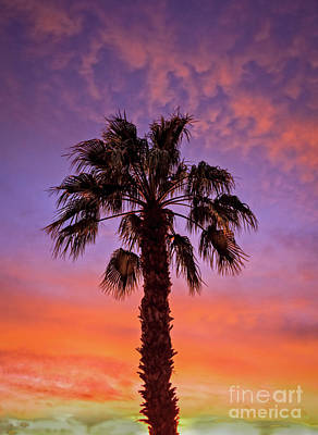 Photograph - Beautiful Palm Tree Silhouette by Robert Bales