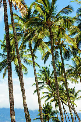 Art Print featuring the photograph Beautiful Palms Of Maui 16 by Micah May