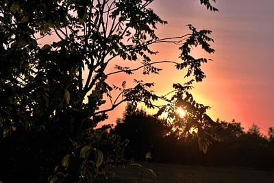 Photograph - Beautiful Park Sunset View Trees by Matt Harang