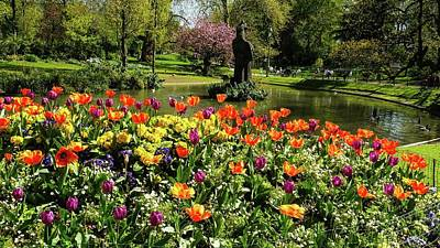 Photograph - Beautiful Park  With Tulip Flowers by Tamara Sushko