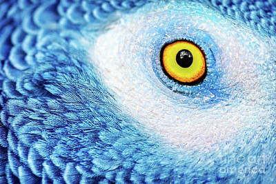 Photograph - Beautiful Parrot Eye by Anna Om