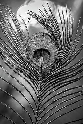 Photograph - Beautiful Peacock Feather In Black And White by Debra and Dave Vanderlaan