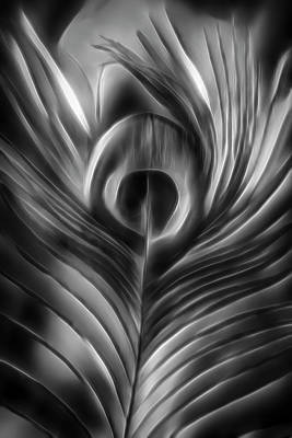 Photograph - Beautiful Peacock Feather In Dreamy Black And White by Debra and Dave Vanderlaan