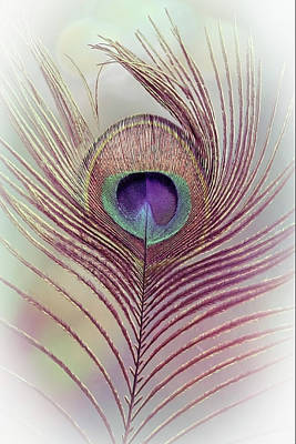 Photograph - Beautiful Peacock Feather In Soft Tones by Debra and Dave Vanderlaan