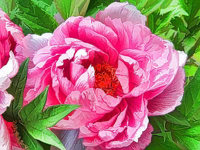 Beautiful Peony Flower 1 Art Print by Lanjee Chee