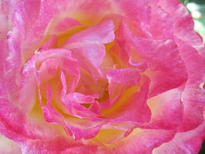 Photograph -  Beautiful Petals by Vesna Martinjak