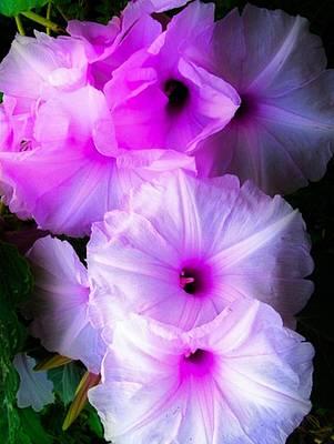 Digital Art - Beautiful Petunias by Gayle Price Thomas
