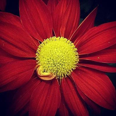 Photograph - Beautiful Phone Flower #1 by Fred Bonilla