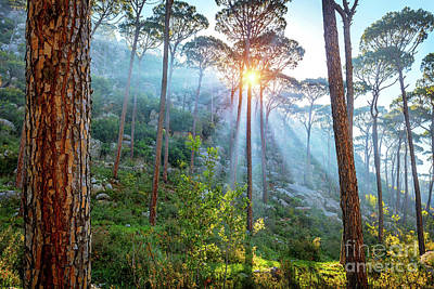 Photograph - Beautiful Pine Forest by Anna Om