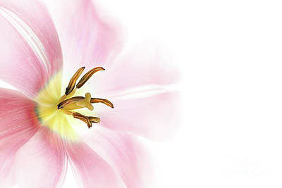 Photograph - Beautiful Pink Flower by Anna Om