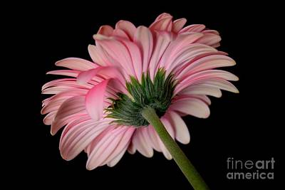 Photograph - Beautiful Pink Lady by Jeannie Rhode