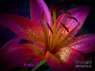Photograph - Beautiful Pink Lily by Sonya Chalmers