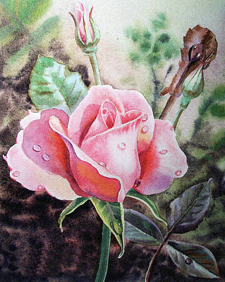 Roses Royalty-Free and Rights-Managed Images - Beautiful Pink Rose With Dew Drops Watercolor by Irina Sztukowski