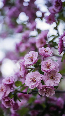 Beautiful Pink Spring Flowers With Natural Bokeh Art Print by Vishwanath Bhat
