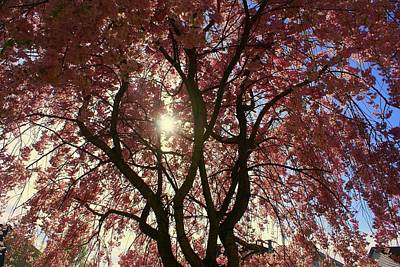 Beautiful Pink Tree Art Print