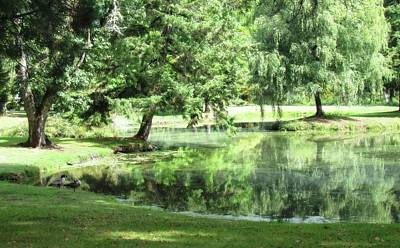 Photograph - Beautiful Pond With Geese by Katie Wing Vigil