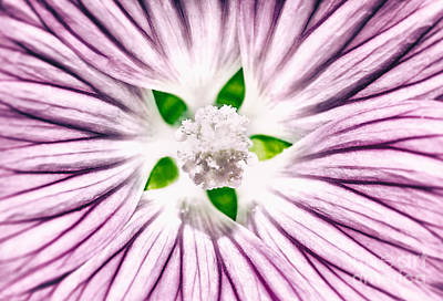 Photograph - Beautiful Purple Flower Background by Anna Om