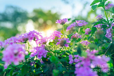 Photograph - Beautiful Purple Flowers by Anna Om