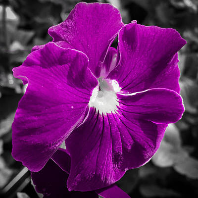 Photograph - Beautiful Purple by Nathan Little